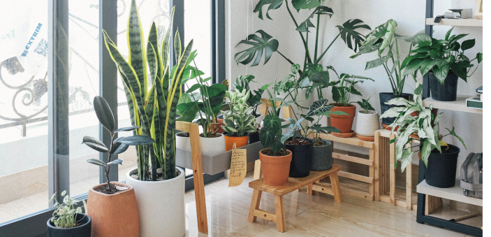 Houseplants That Work As Air Filters