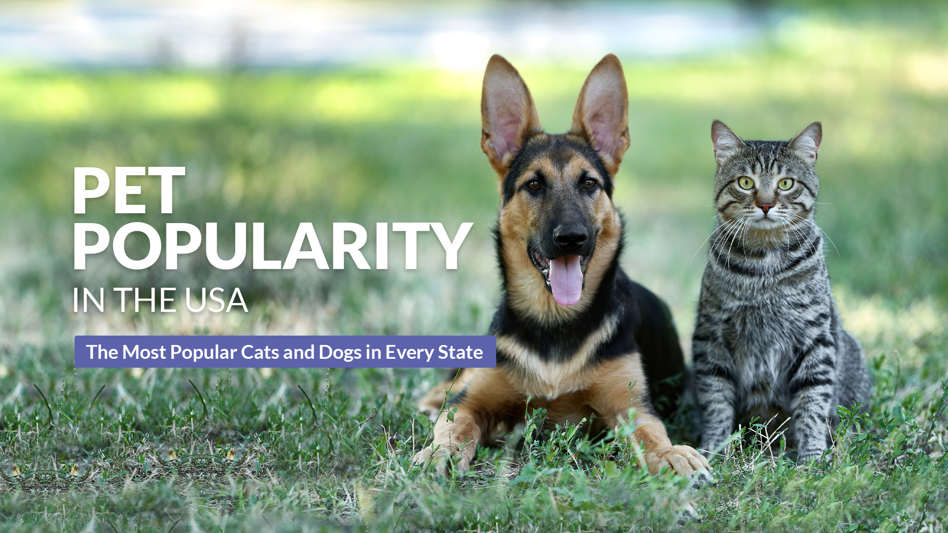 Pet Popularity in the USA
